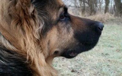 Hundehotel, Hundepension oder Unterbringung bei Freunden?